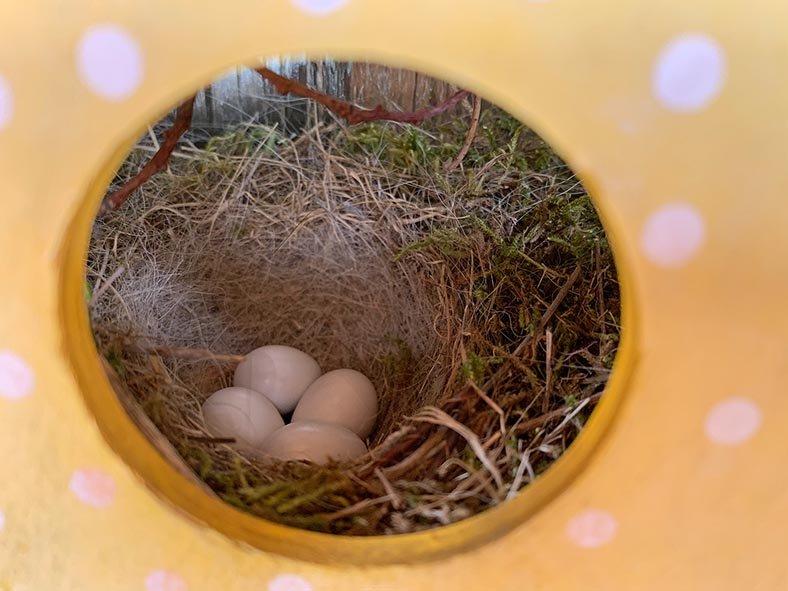 Hausrotschwanz-Nest-im-Türkranz-2-Sylvia-Bonin