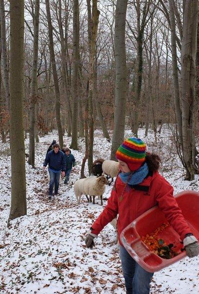 Waldwanderung mit Schafen 07