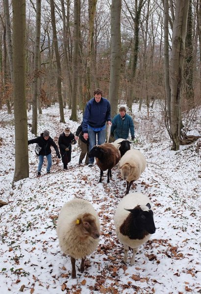 Waldwanderung mit Schafen 09