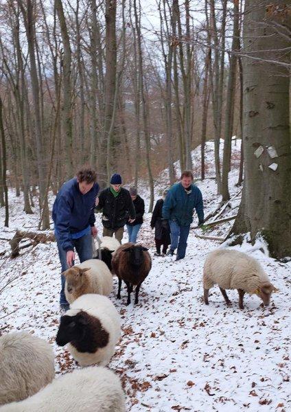 Waldwanderung mit Schafen 10