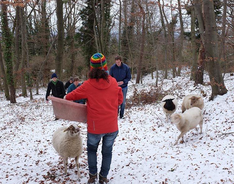 Waldwanderung mit Schafen 05