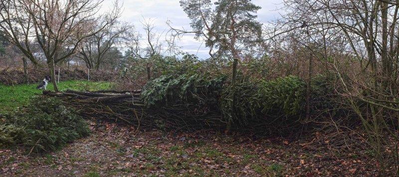 Aktion-Weihnachtsbaum-05-10x22s