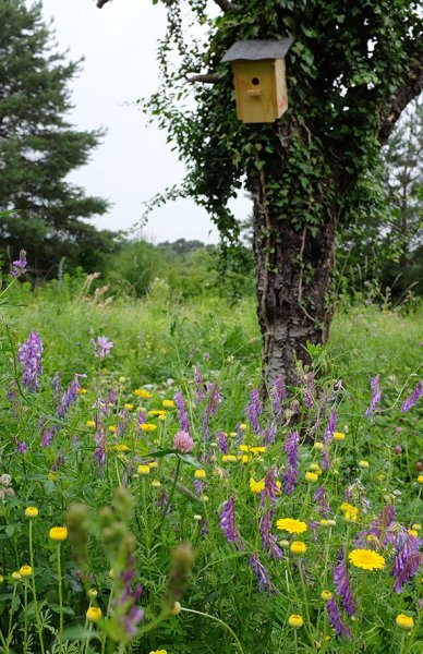 Blütenpracht auf der Bienenweide 3