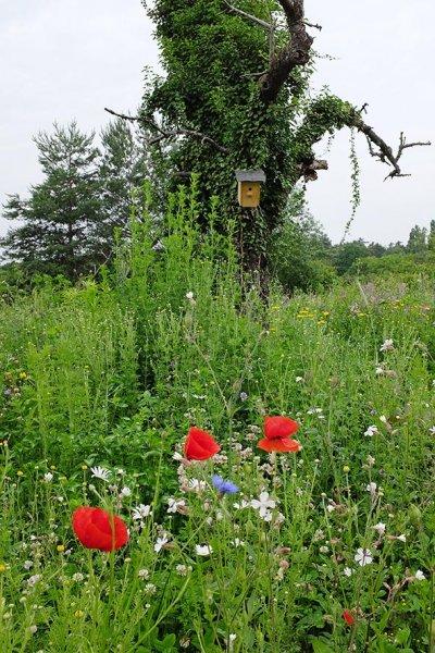 Blütenpracht auf der Bienenweide 4