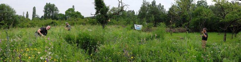 Panorama Bienenweide 5