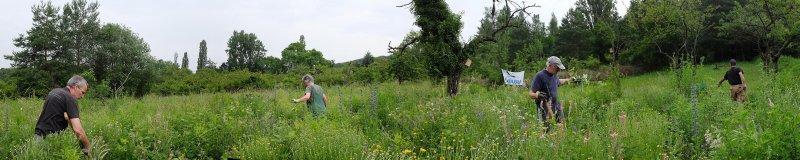 Panorama Bienenweide 6