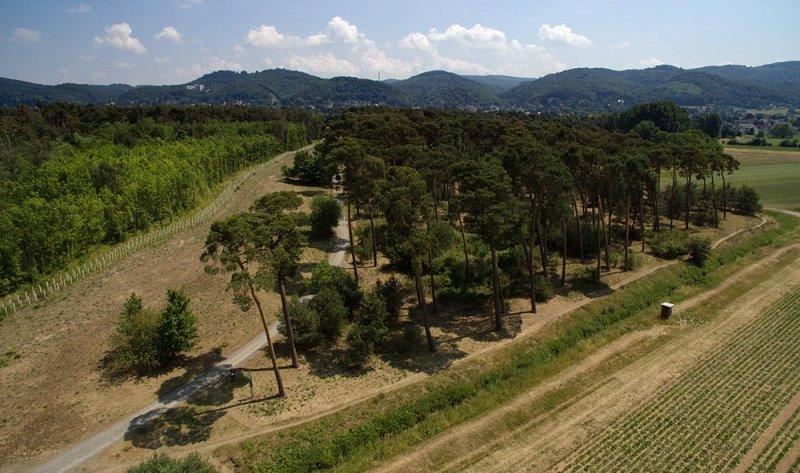 Luftbild Bickenbacher Düne 02