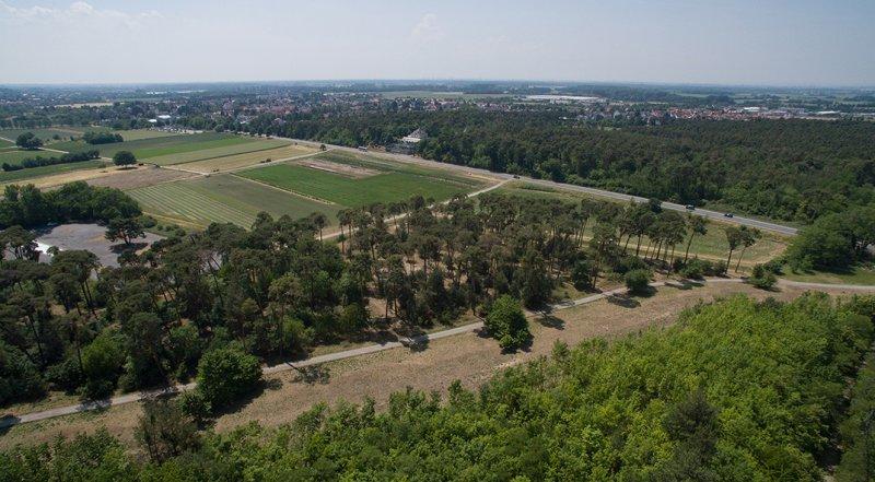 Luftbild Bickenbacher Düne 04