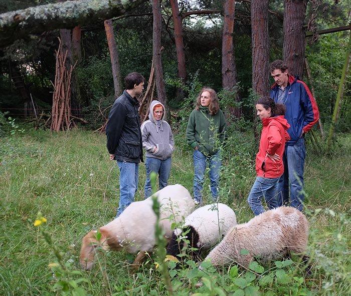 Schafgruppe bei der Böckchenherde 4