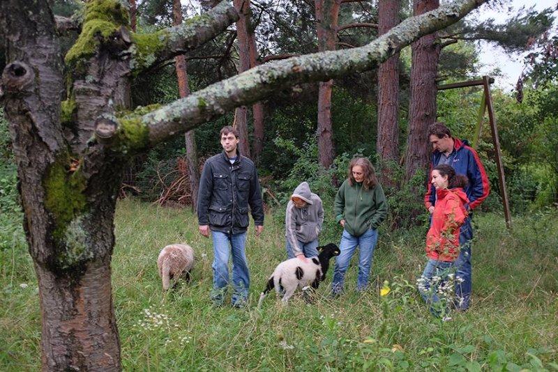 Schafgruppe bei der Böckchenherde 5