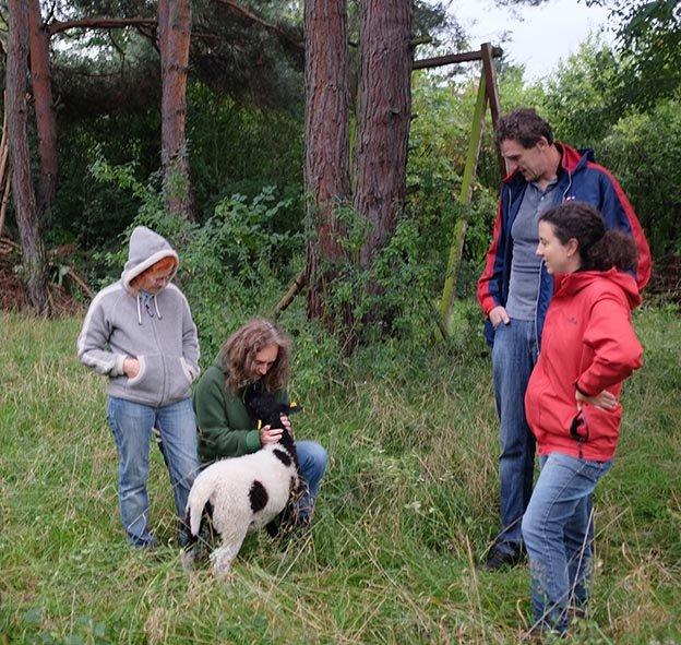 Schafgruppe bei der Böckchenherde 6