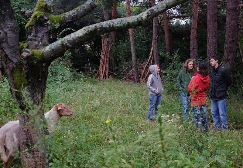 Schafgruppe bei der Böckchenherde 1