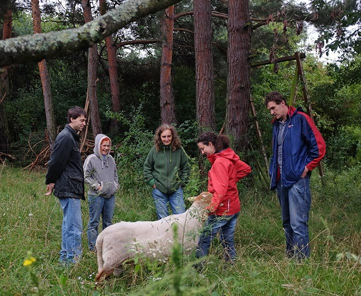 Schafgruppe bei der Böckchenherde 2