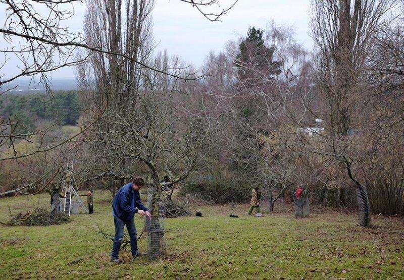 Baumschnitt Bipsweide 05