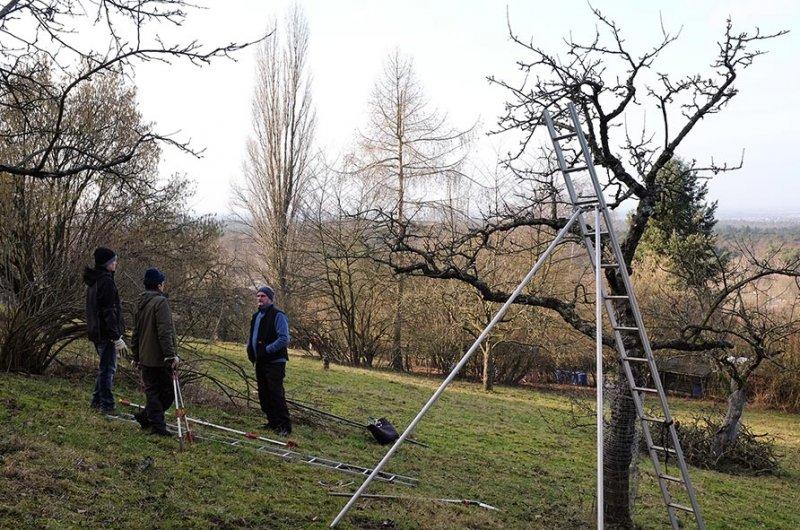 Baumschnitt Bipsweide 10