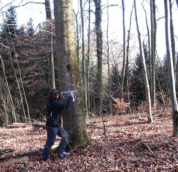 Steinbruch Nieder-Beerbach Nistkasten-Aktion 1
