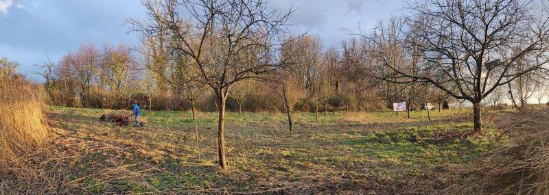 Storchenmast-Wiese-Hähnlein-08-10x28s