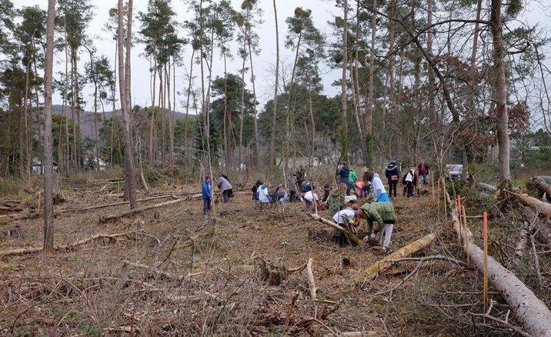 Pflanzaktion-im-Gemeindewald-Seeheim-14-10x16s