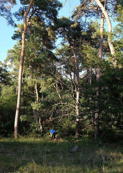 Einsatz-Wald-Odenwaldstrasse-11-10x15s