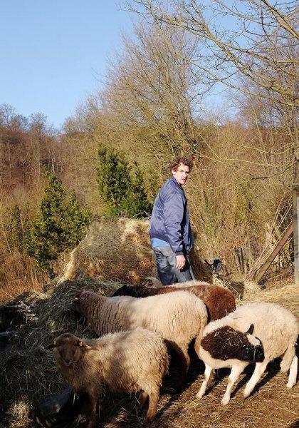 Schafe auf den Etzwiesen 3