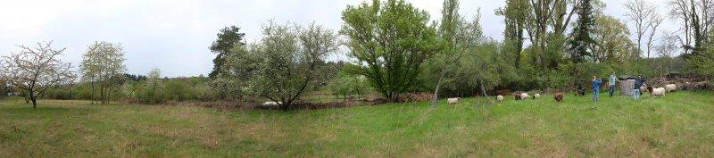 Schafe-auf-der-Götterbaumweide-06-10x45s