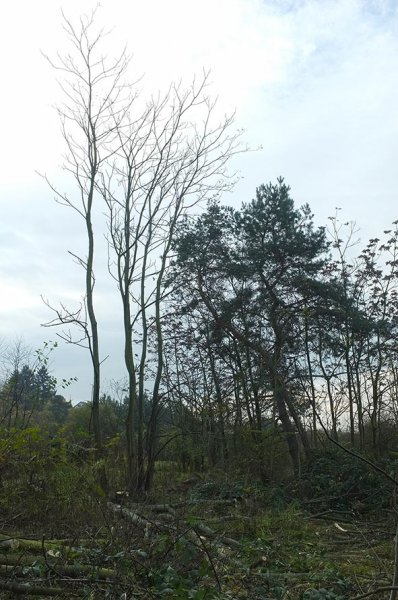 Götterbäume 1