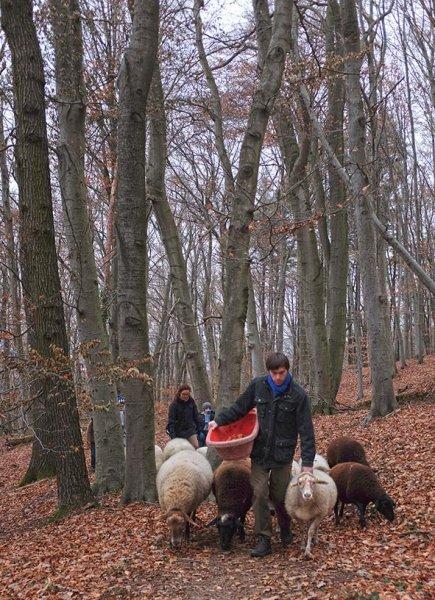 Waldwanderung mit Schafen 04 10x14s