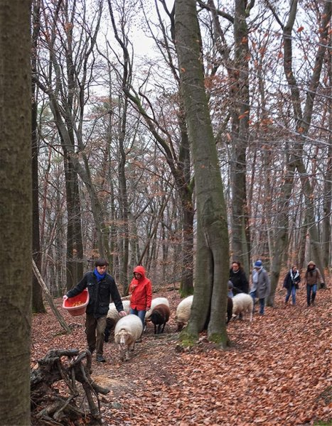 Waldwanderung mit Schafen 05_ 10x14s