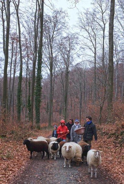Waldwanderung mit Schafen 15 10x15s