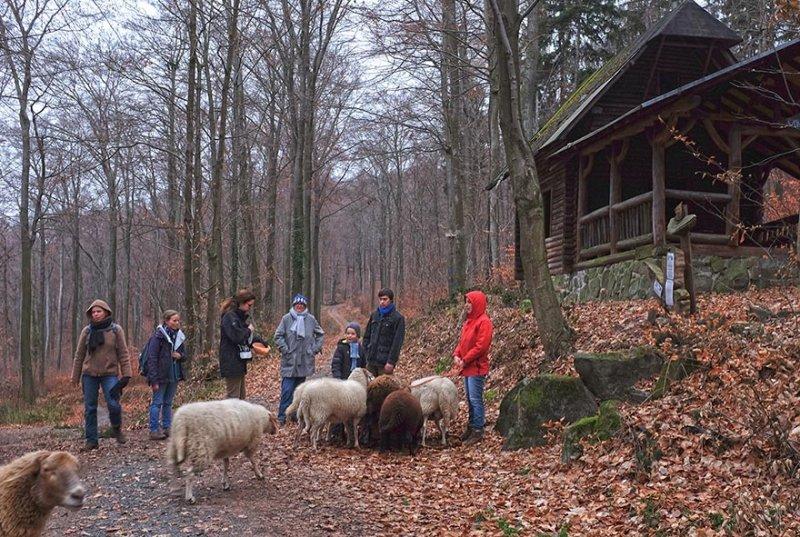 Waldwanderung mit Schafen 17 10x15s