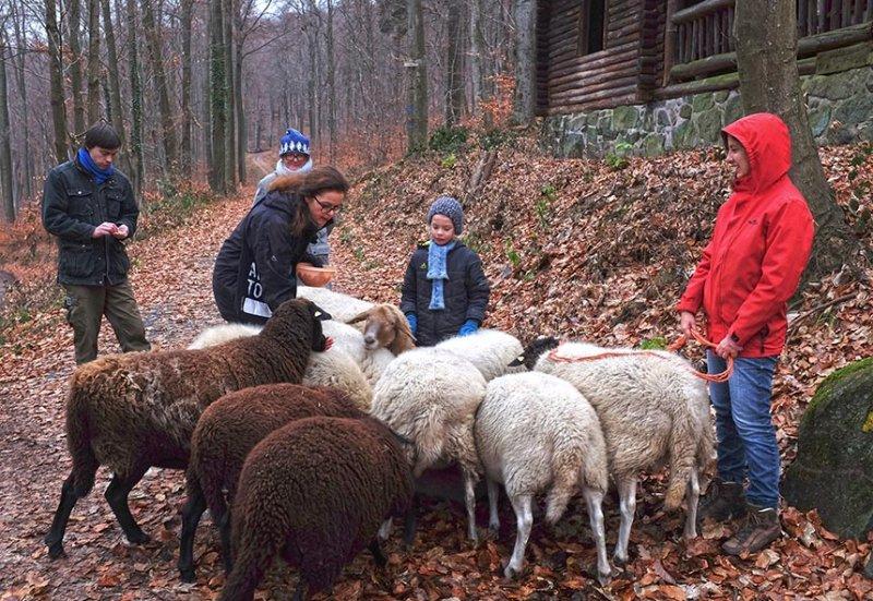Waldwanderung mit Schafen 22 10x15s