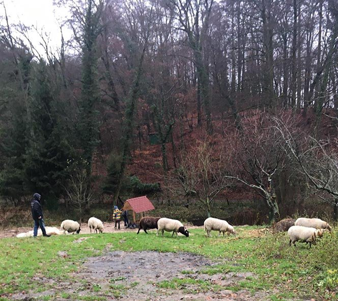Etzwiesen-Foto-Regine-Kinner-Scherf