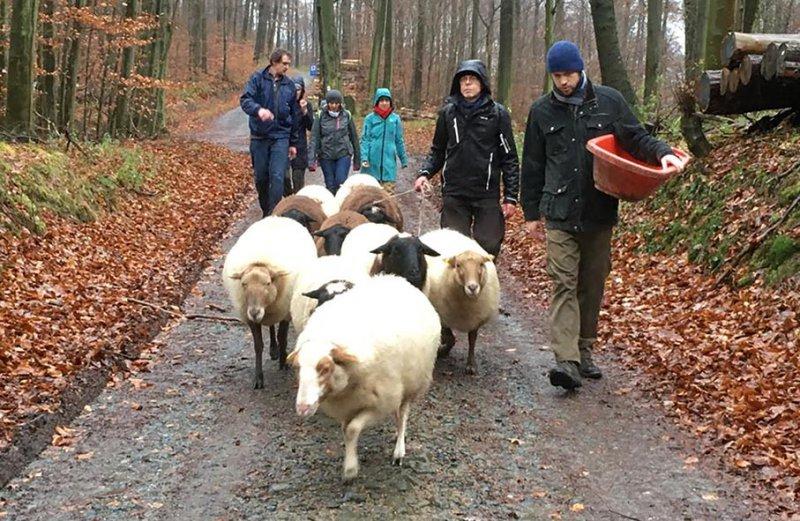 Wanderung-mit-Schafen-2-Foto-Regine-Kinner-Scherf
