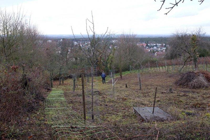 Zäun-bergen-Im-Harkel-01-10x15s