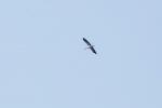 Landbachaue Storch