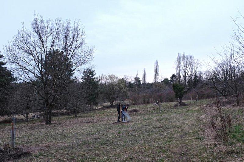 Baumschutz 2