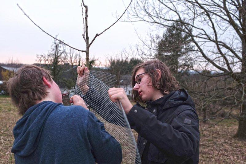 Baumschutz 3