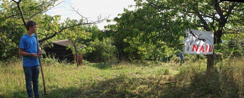 Pflege-Orchideenwiesen-14-10x25s