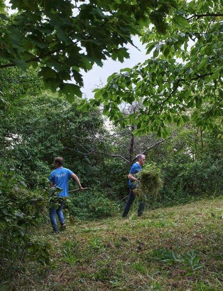 Pflege-Orchideenwiesen-20-10x13s