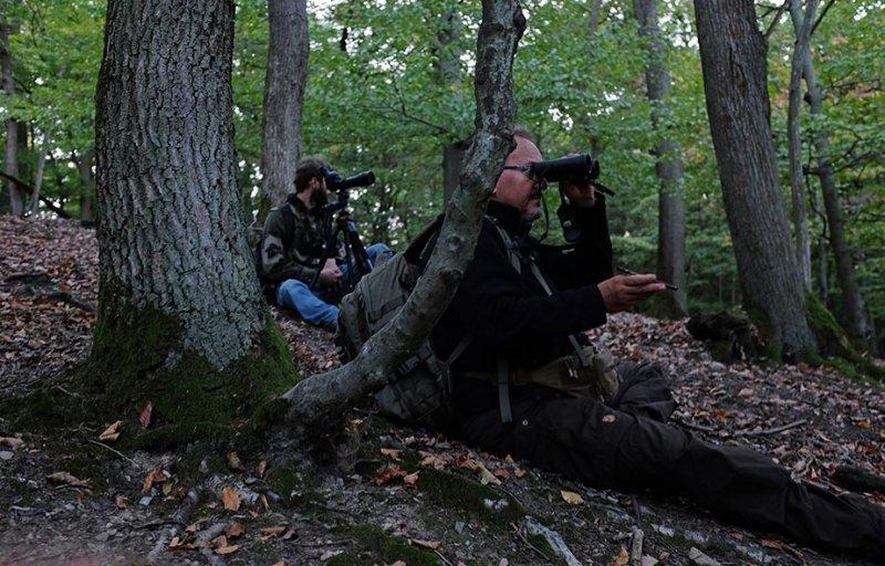 Rotwild im Wald - Tonspur