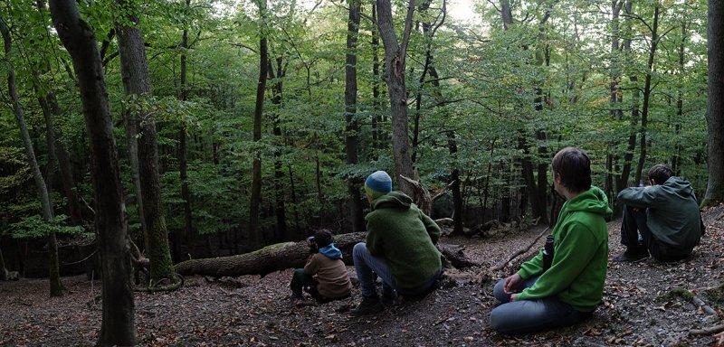 Rotwild im Wald