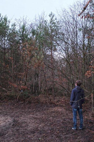 Naturzaun am Waldweiher Malcher Tanne - Baum fällt 1