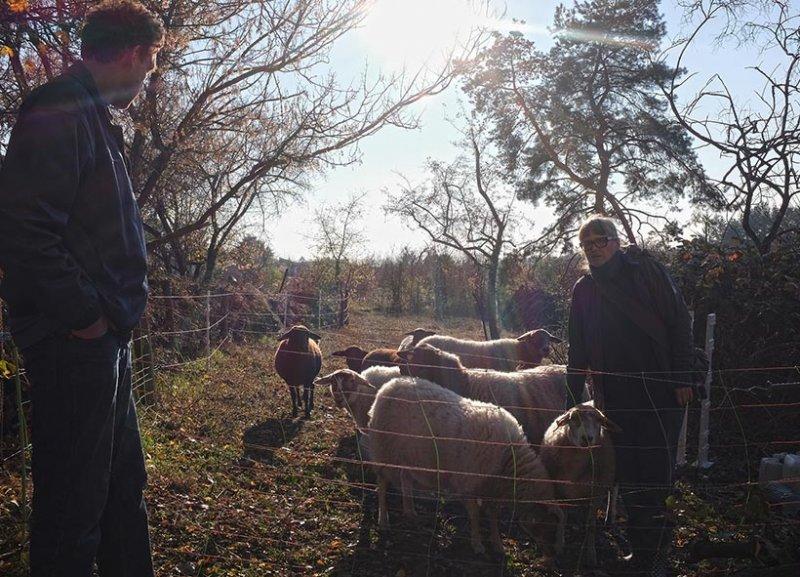 Schafe umstellen 01 10x14s