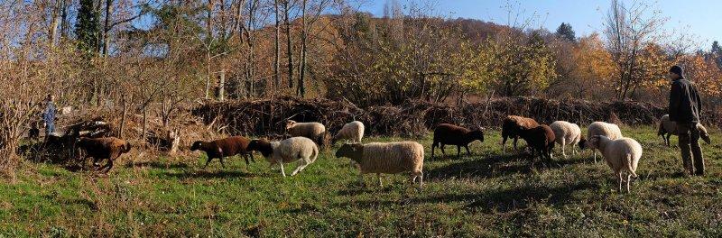 Schafe umstellen 08 FAKE 10x30s