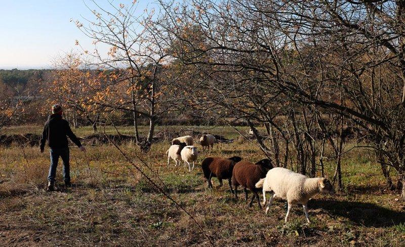 Schafe umstellen 12 10x16s