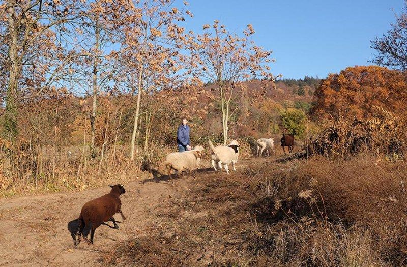 Schafe umstellen 14 10x15s