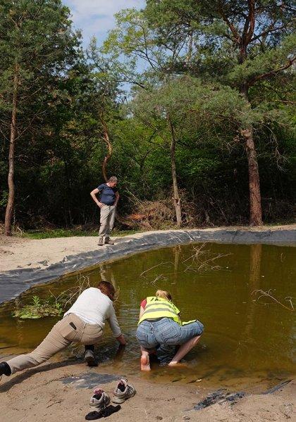 Amphibienteich-Malcher-Tanne-10-10x15s