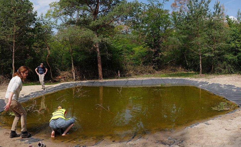 Amphibienteich-Malcher-Tanne-12-10x16s