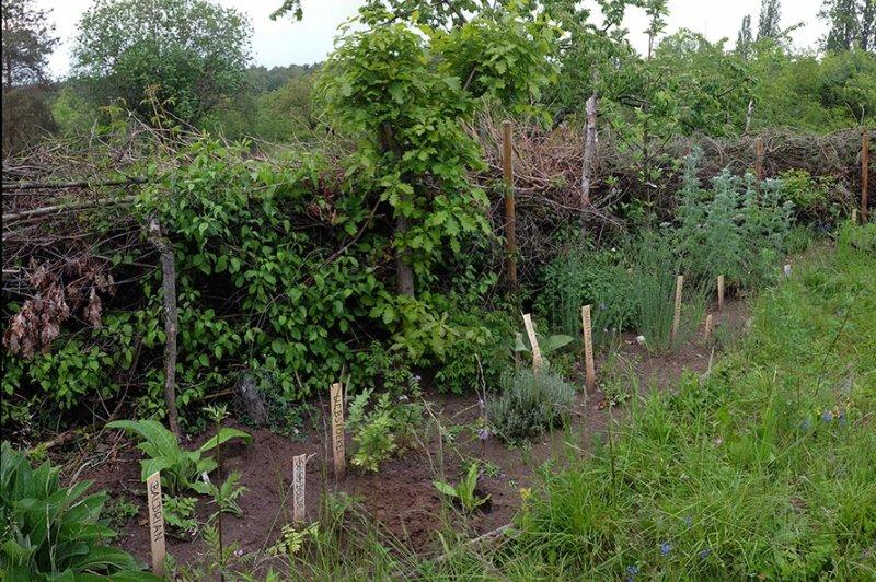 Tag-der-Artenvielfalt-65-Kräutergarten-Wühlmausgarten-10x15s