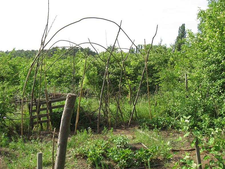 Füchsetreff Wühlmausgarten - Gemüsebeet
